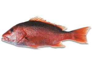 ماهی گرم