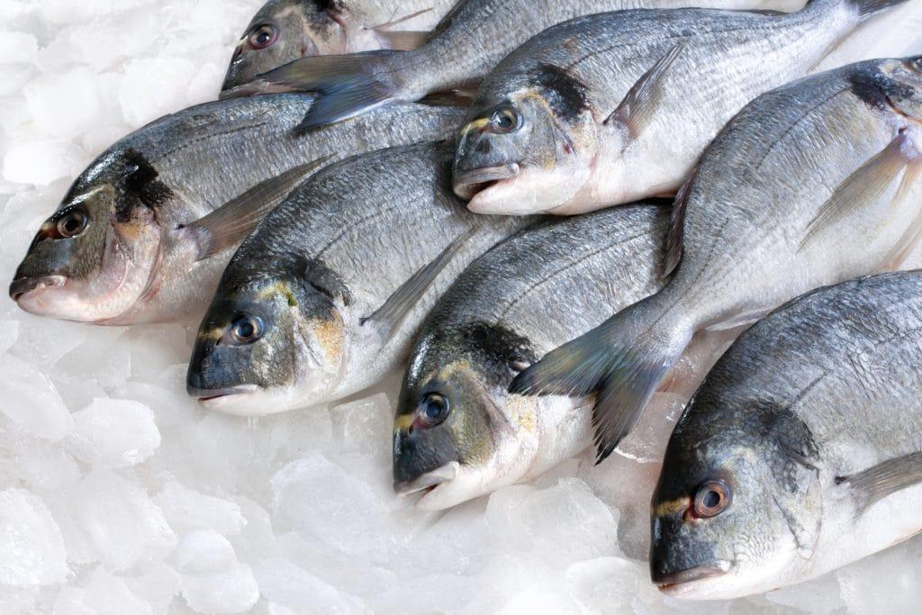 ماهی صبیتی یا جهرو