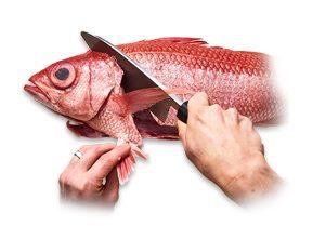 ماهی تکه بشه. سر و دم ماهی نیاز ندارم.